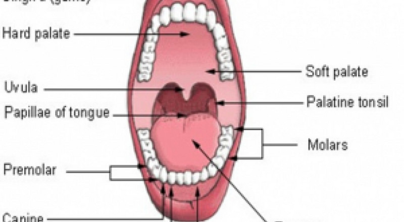 Types of teeth and their common problems