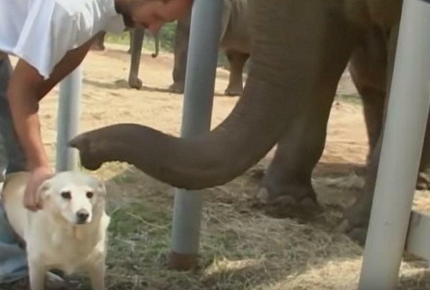 Niezwykła przyjaźń słonia i psa