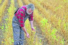 Povrće koje je SIMBOL SRBIJE moramo da uvozimo, a da nije tako koštalo bi 600 DINARA ZA KILOGRAM!