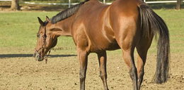 Koń kopnął 10-miesięczne dziecko!