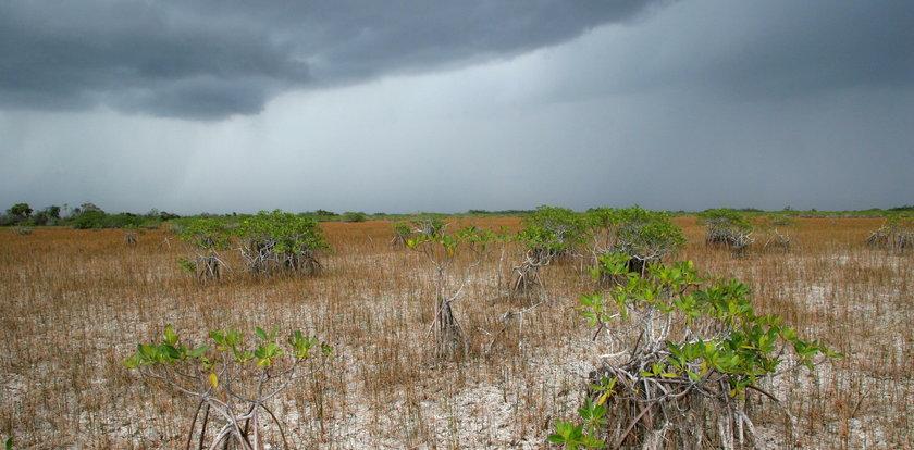 Dziwne zjawisko w pogodzie. Pada, a mamy suszę. Jak to możliwe?