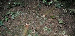 Szokująca śmierć w lesie