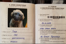 """""""PAŠA ĆE BITI PRIVRŽEN PREDSEDNIKU PUTINU"""" Vlasnik uzgajivačnice iz koje šarplaninac o ŠOKU kada je čuo kome ide pas"""
