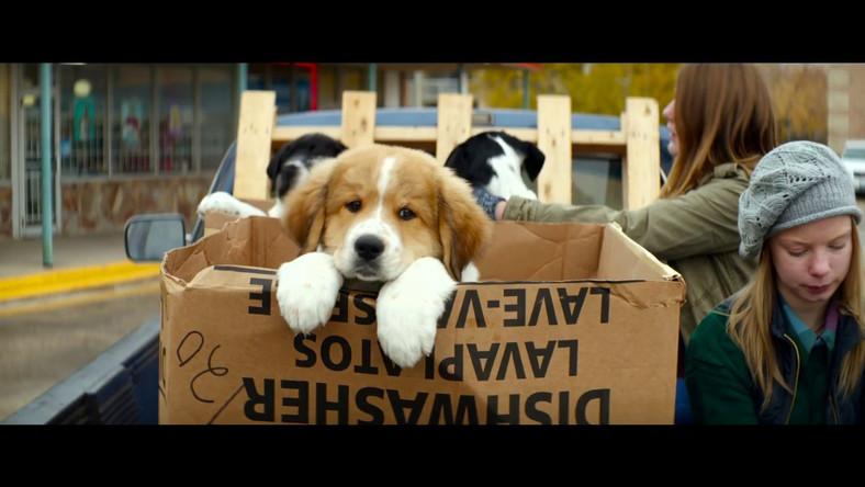 """Kadr z filmu """"Był sobie pies""""."""