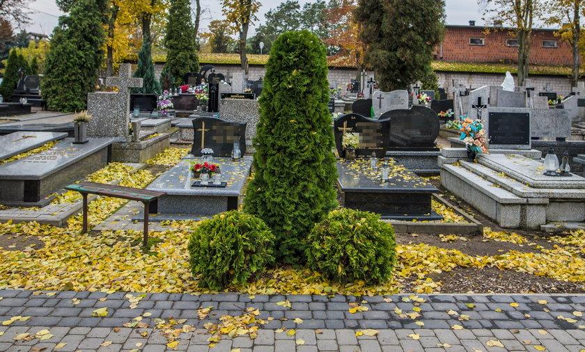 Mieszkańcom Woźniakowa tuje na cmentarzu się dwuznacznie