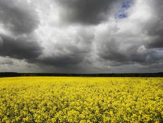Szkodliwe pestycydy wracają na polskie pola: Minister rolnictwa wyraził zgodę na stosowanie neonikotynoidów