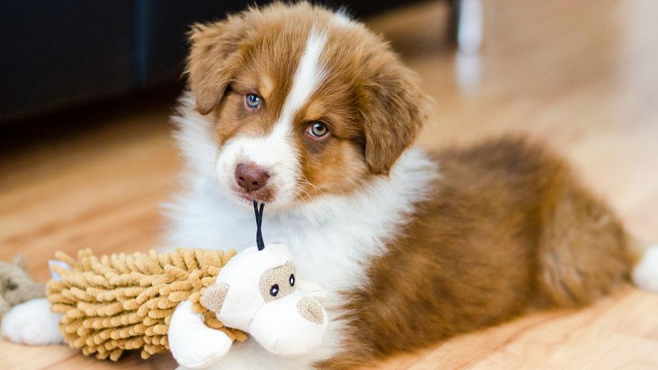 Koszty utrzymania psa zależą od jego rasy i wielkości - thejokercze/stock.adobe.com
