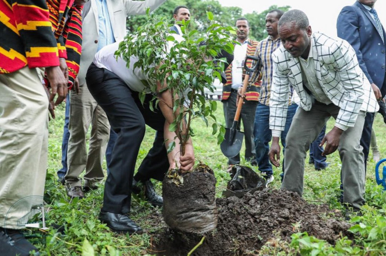 The planting is part of Mr Abiy's national 'green legacy' initiative which strives to grow 4 billion trees in the country this summer.