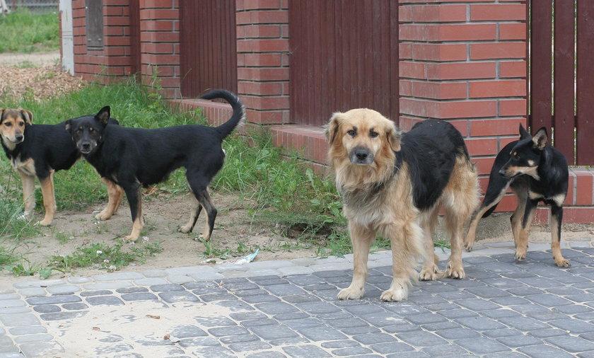 Wałęsające się psy