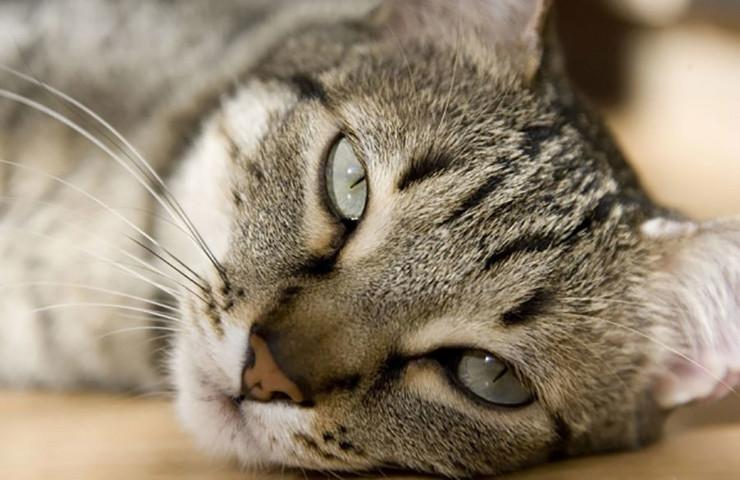mačka foto