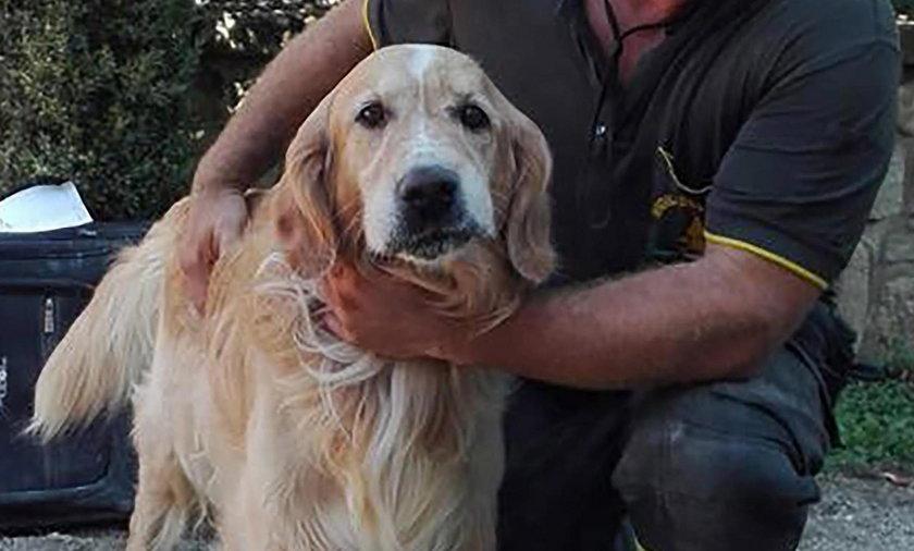 Trzęsienie ziemi we Włoszech. Pies Romeo przeżył 9 dni pod gruzami domu