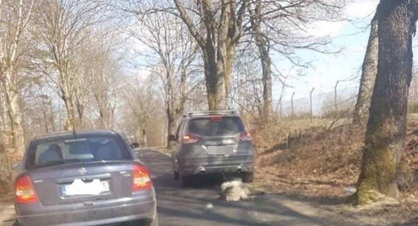 Na działce b. senatora PiS odkopano truchło psa.