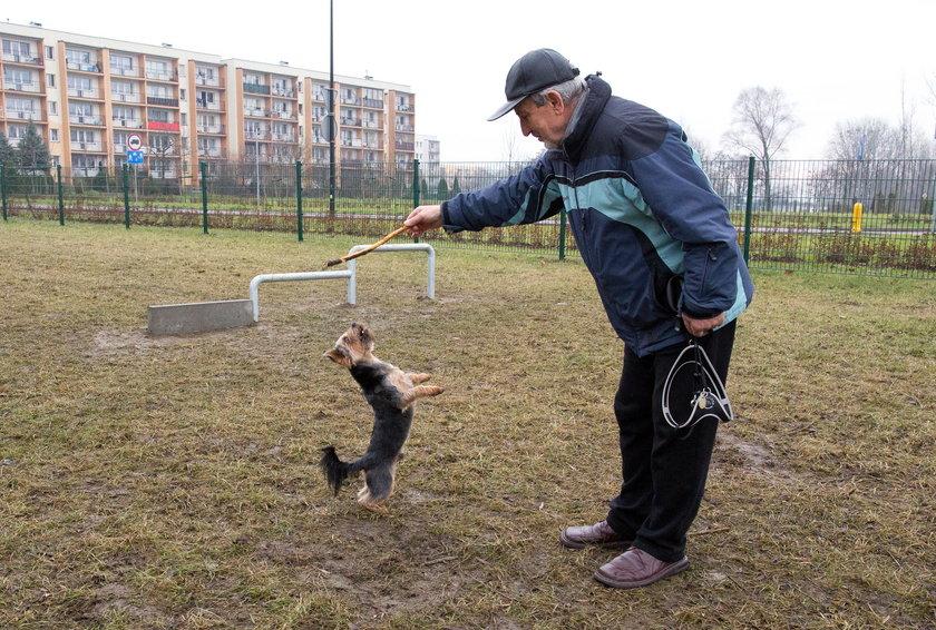 Wybieg dla psów