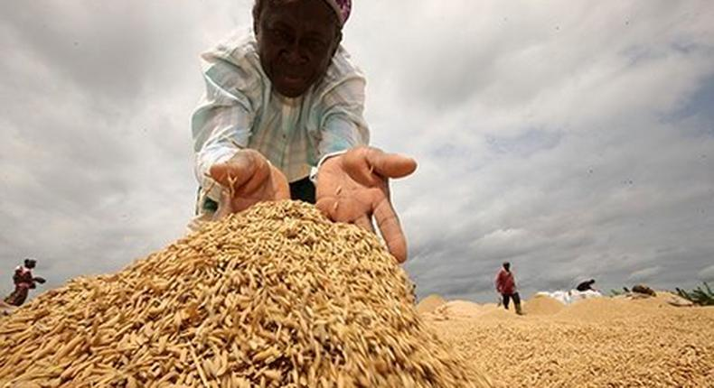 Local rice to be listed by Ghana Commodity Exchange