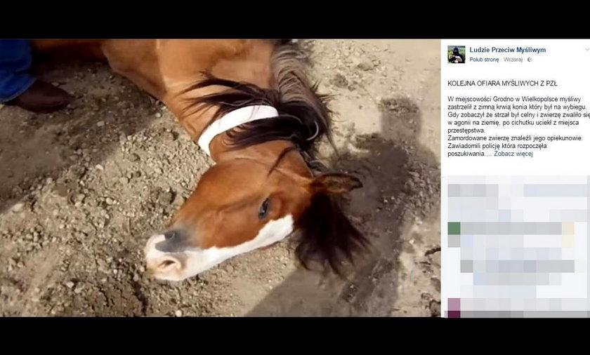 Zastrzelił konia wartego 170 tys. zł! Myślał, że to dzik