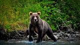 Białoruski niedźwiedź szaleje w Polsce! Służby ostrzegają
