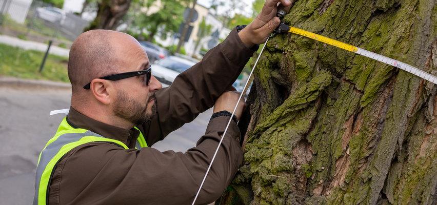 Zaglądają do wnętrza drzew. Tomografem!