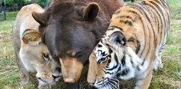 """Przyjaźń jak z """"Księgi dżungli"""". Wzruszające zdjęcia"""