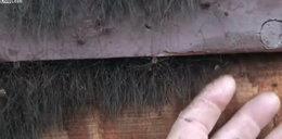 """Znalazł dziwne """"włosy"""" i je dotknął. Na sam widok robi się słabo"""
