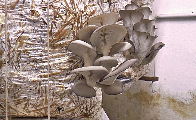 Od oko 180 džakova gljiva, kada ih prodaju po ceni od 250 dinara, Markovići zarade oko 45.000 dinara