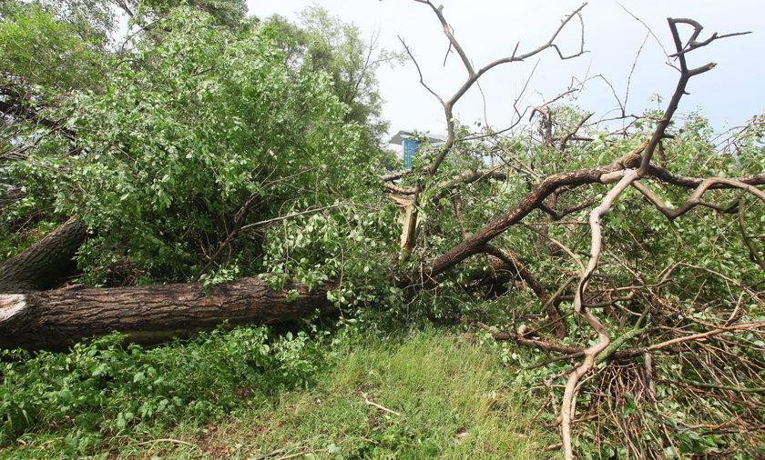 Drzewo zabiło 63-letnią kobietę