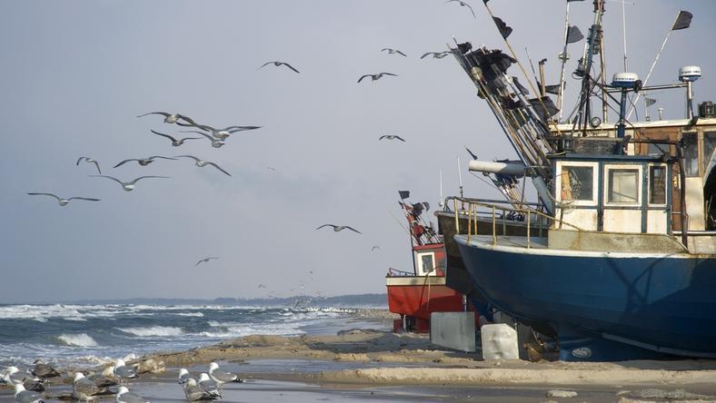 Wielka Brytania wychodzi z Unii i przy okazji nie pozwoli nawet łowić ryb na swoich wodach