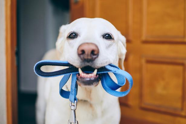 Pies, smycz, spacer