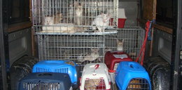 Dramat pod Warszawą! Dziesiątki martwych kotów w zamrażarce