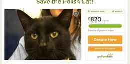 Chcieli uśpić kota, bo był z Polski
