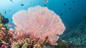 Syntetyczny koralowiec oczyści oceany
