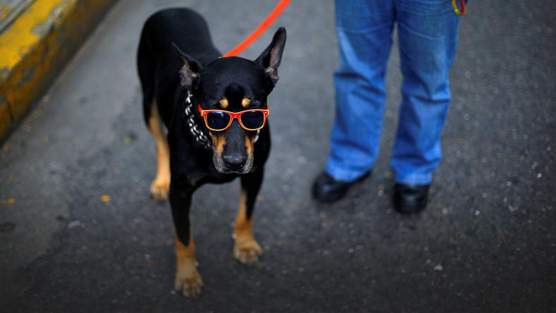A dog is seen wearing sunglasses on a street in Caracas