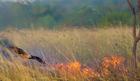 PERNATI PIROMANI Požari u Australiji mogli bi da imaju KATASTROFALNE razmere iz najneočekivanijeg razloga
