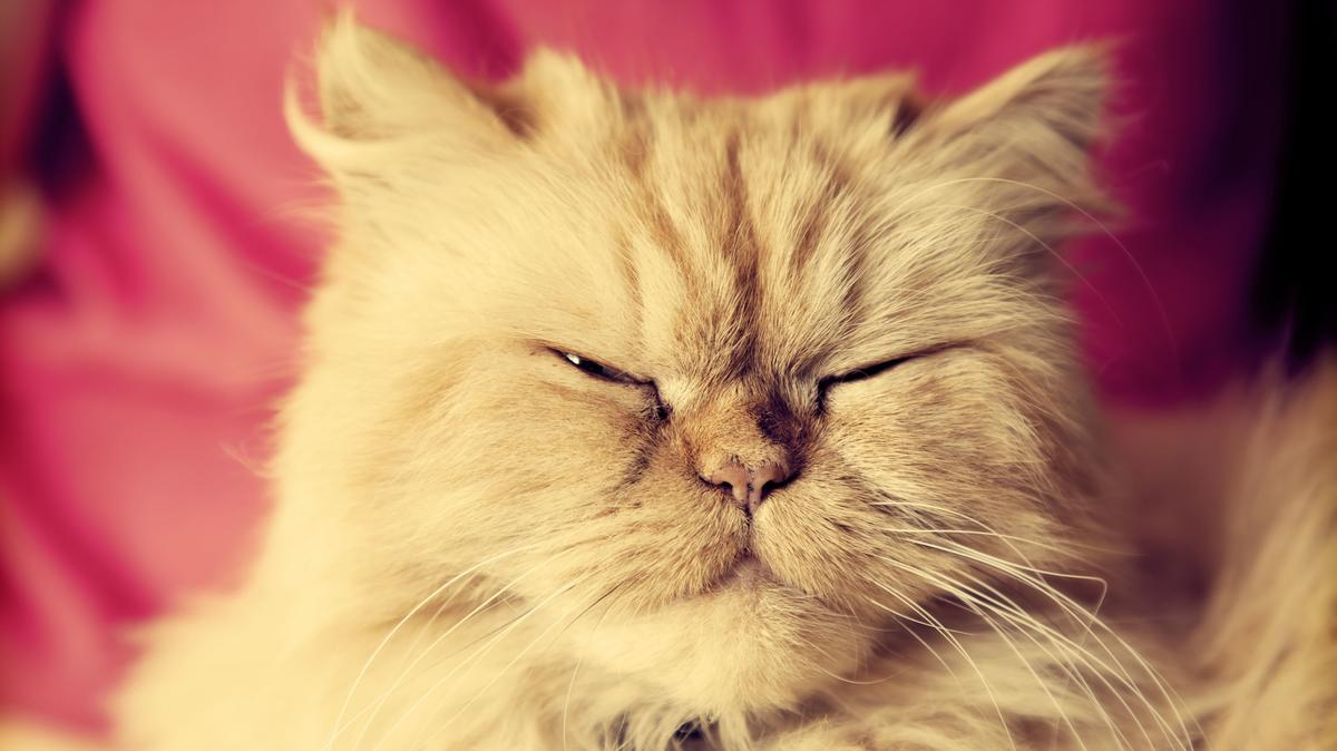 macska erekciós fotók merevedési problémák merülnek fel