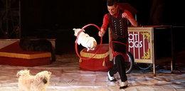 Zobacz pokaz bezdomnych psów w cyrku