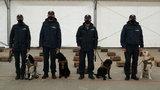 Nowy sposób na walkę z COVID-19. Zakażonych będą wykrywać... psy
