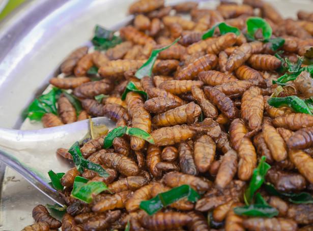 Czy dania z owadów podbiją serca i podniebienia Portugalczyków?