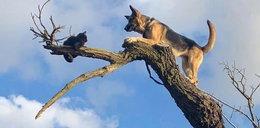 Chciał dorwać kota, sam zapędził się w pułapkę. Gdzie oni wleźli?!