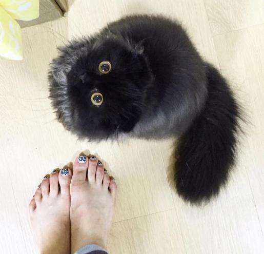 560ac70113e6 Czy te oczy mogą kłamać  Kot Gimo rozczula za ich pomocą internet