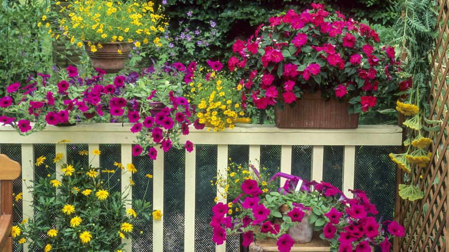 Kwiaty są doskonałą ozdobą tarasu i balkonu - PIXATERRA/stock.adobe.com