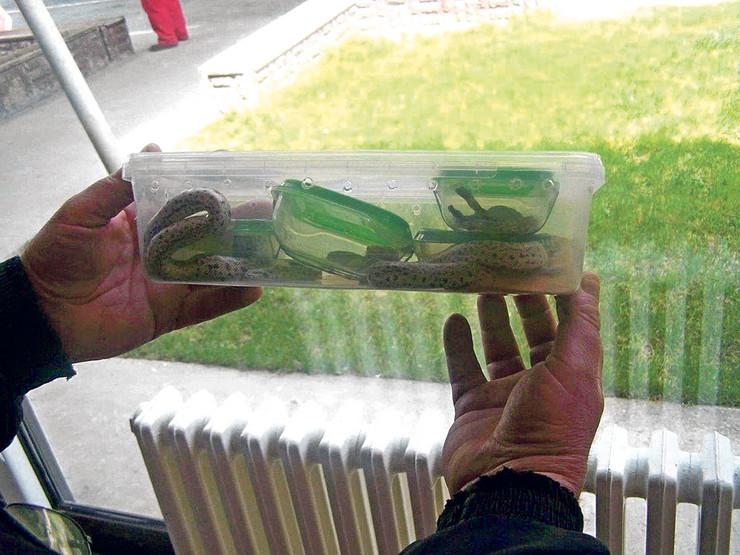 Zivotinje u plasticnim kutijama za hranu zmija zmije foto Uprava carina1