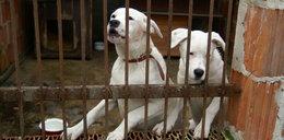 Szok w schronisku! Pracownik kradł karmę dla psów