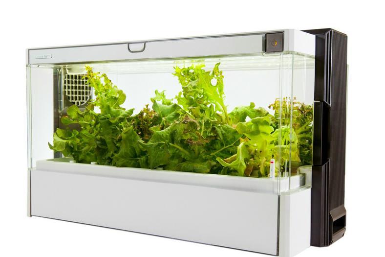 źródło: green-farm.shoplo.com