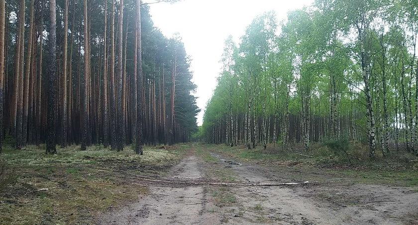 Lubuskie: Policjanci wracają do zabójstwa sprzed lat. Ciało Eli odnaleźli w lesie