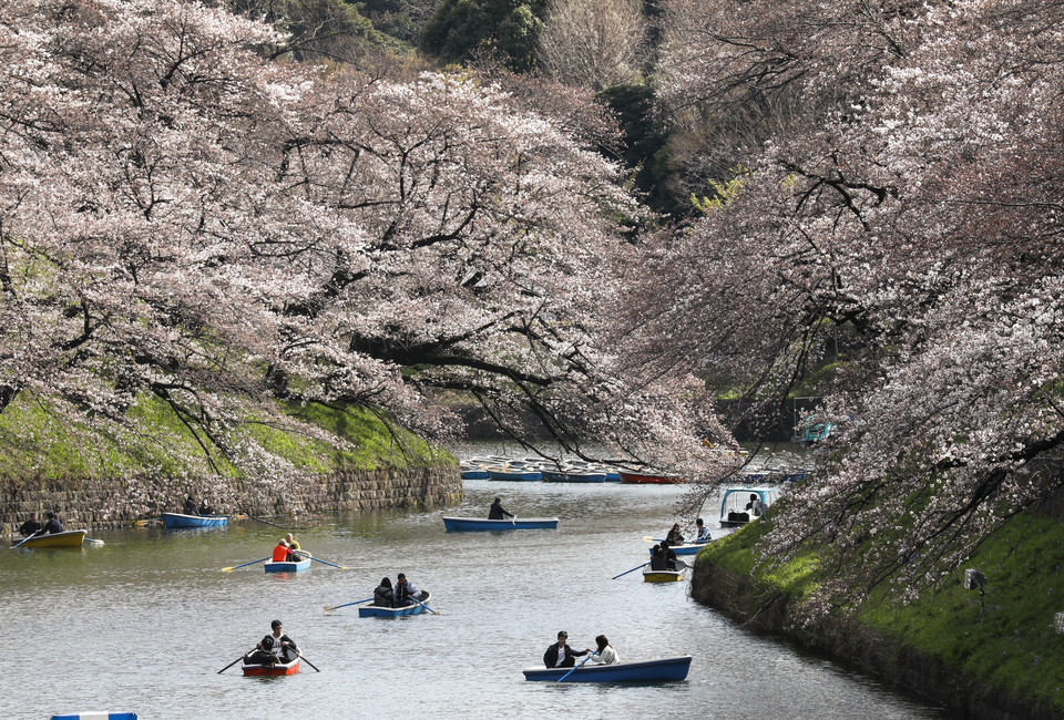 epa06622905 - JAPAN CHERRY BLOSSOMS BLOOM (Cherry blossoms bloom in Tokyo)