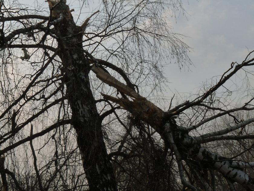 Niepublikowane zdjęcia ze Smoleńska