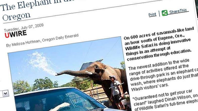 Tam słonie myją samochody!