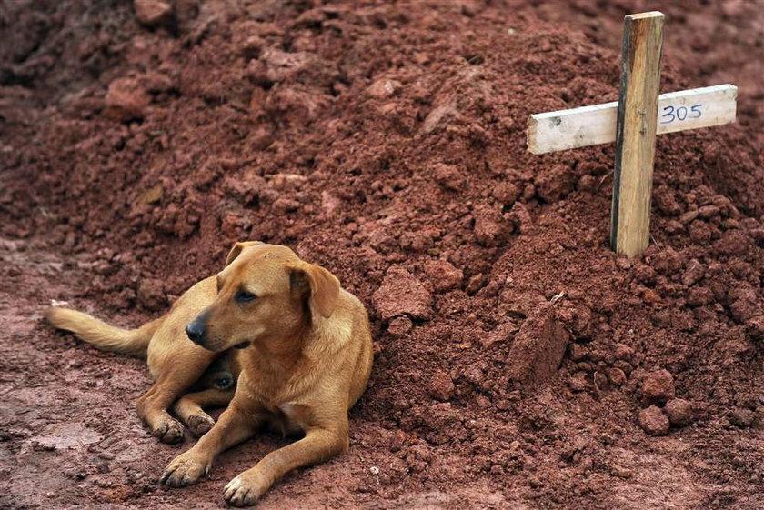 Trzy dni czuwał przy grobie pani. Znalazł dom