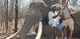 Niemiec zabił pięknego słonia w Zimbabwe