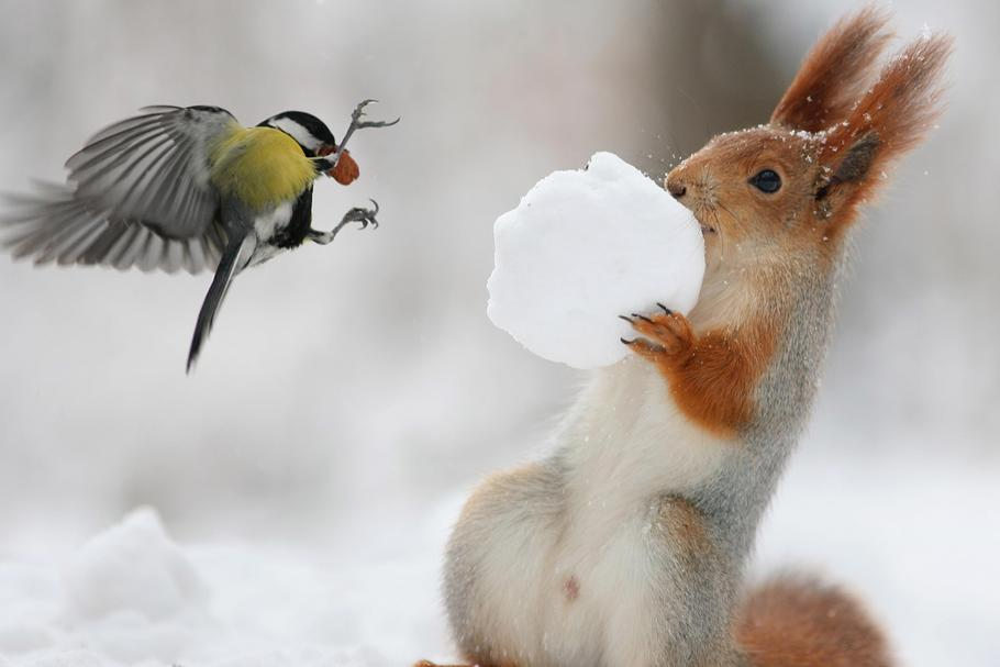 SQUIRREL AND BIRD / SQUIRREL AND BIRD /1454061