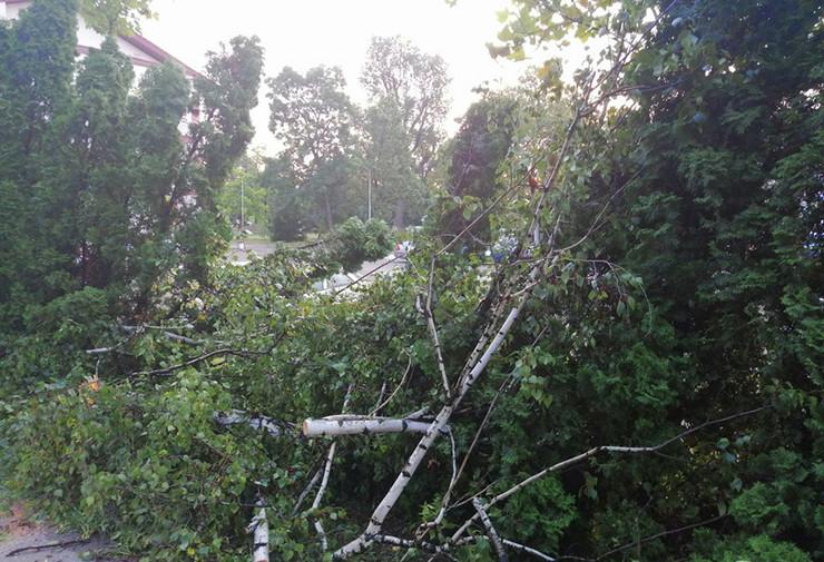 Grom oborio stablo na putu kod Kruševca, putnici autobusa pomogli da se drvo skloni sa puta